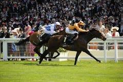 Horse Racing. At Royal Ascot, England 2011 royalty free stock images