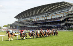 Horse Racing. At Royal Ascot,England Royalty Free Stock Photos