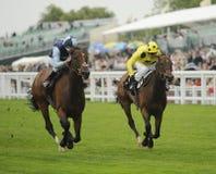 Horse Racing. At Royal Ascot,England Royalty Free Stock Photos