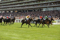 Horse Racing. At Royal Ascot,England 2011 Royalty Free Stock Images