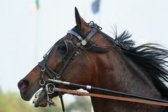 Horse racing. Some beautiful photos of a grand prix in Italy stock photography