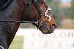 Horse racing. Some beautiful photos of a grand prix in Italy stock photos