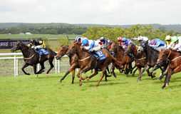 Horse Racing Stock Photography