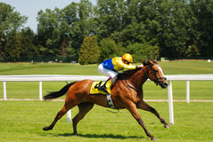 Horse racing. Horse in full gallop Royalty Free Stock Photo