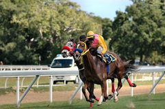 Horse racing. On the Island of Barbados, West Indies Stock Photo