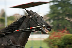 Horse racing Royalty Free Stock Photography
