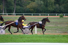 Horse racing. In France Royalty Free Stock Photography
