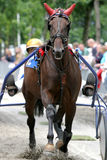 Horse racing. At racecorse, standardbred Royalty Free Stock Photos