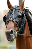 Horse racing. Horse in action portrait Royalty Free Stock Photo