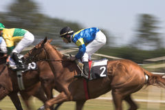 Horse racing. Competition between multilple horses royalty free stock images