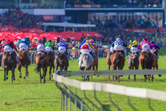 Horse Racing Action Final Straight Crowds Royalty Free Stock Photos