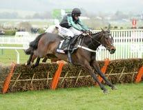Horse Racing royalty free stock image