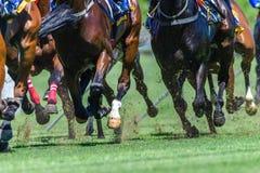 Horse Racing Close-Up Hoofs Legs Grass