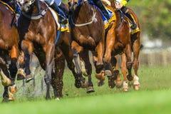 Horse Racing Animals Hoofs Legs Action. Horse racing animals bodies hoofs legs closeup  track action photo Stock Photo