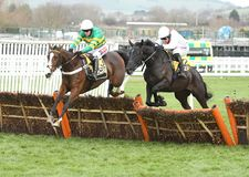 Horse Racing. Apple`s shakira 1st green-yellow and nube negra 2nd weight seen here jumping the last at cheltenham races 16-12-17 Royalty Free Stock Photos