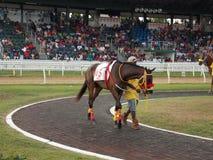 Horse Racing in Barbados at the Garrison Savannah Royalty Free Stock Images