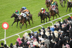 Horse Racing Stock Images