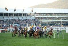 Horse Racing. Bumper feild at Cheltenham races 15-3-17 Royalty Free Stock Image