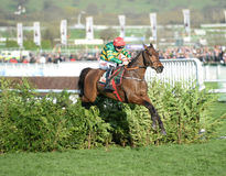 Horse Racing. Cause of causes 1st Cheltenham races 15-3-17 Stock Photo