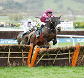 Horse Racing. Champagne classic 1st seen here jumping the lasdt at Cheltenham races 17-3-17 Stock Images