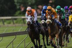 Horse Racing Close Action Stock Photography