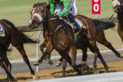 Horse Racing. Closeup action of unidentified jockey horse on race track stock photos
