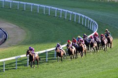 Horse racing competition Royalty Free Stock Photography