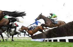 Horse Racing. Cue card blue-pink takes a fall at the 3rd last at Cheltenham races 17-3-17 Stock Photography