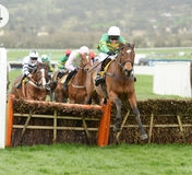 Horse Racing. Defi du seuil jumps the last on his way to winning at Cheltenham races 17-3-17 Royalty Free Stock Photos
