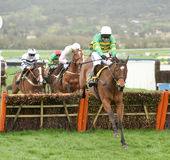 Horse Racing. Defi du seuil jumps the last on his way to winning at Cheltenham races 17-3-17 Royalty Free Stock Image
