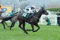 Horse Racing. Domesday book seen here on the run in at Cheltenham races 16-3-17 Royalty Free Stock Photography