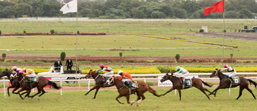 Horse Racing. Event in India, Pune royalty free stock images