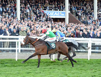 Horse Racing. Fayonagh 1st Near side and debuchet 2nd seen here at Cheltenham races 15-3-17 Stock Image