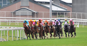 Horse racing in field Royalty Free Stock Images