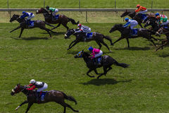 Horse Racing Final Sprint  Stock Image