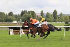 Horse racing - Fitmin solution prix in Prague Stock Images