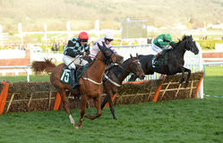 Horse Racing. Flying tiger 1st Far side green divin bere 2nd in the centre and nietzsche 3rd blue-red seen here jumping the last at Cheltenham races 15-3-17 Stock Photo