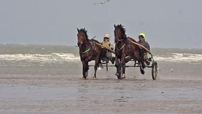Horse racing, French Trotter, harness racing during Training on the Beach, Cabourg in Normandy, France. Slow motion stock video