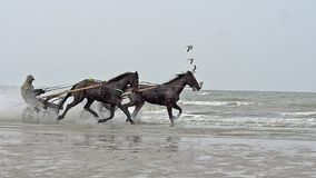 Horse racing, French Trotter, harness racing during Training on the Beach, Cabourg in Normandy, France. Slow motion stock video footage