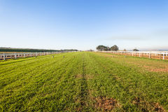 Horse Racing Grass Track. Horse racing training grass track in afternoon color Royalty Free Stock Photo