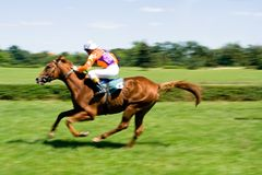 Horse racing on green racecourse Stock Image