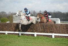Horse Racing. Grey gold 1st blue and dream bolt 2ndred-black seen here jumping the 2nd last at sandown races 4-2-17 Royalty Free Stock Photos