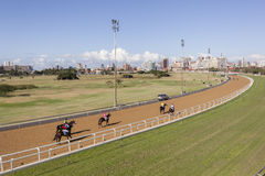 Horse Racing Greyville Stock Image