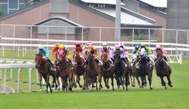 Horse racing group Royalty Free Stock Photography
