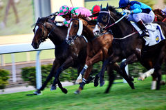 Horse racing. In Happy valley Hong Kong Royalty Free Stock Image