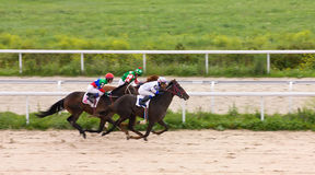 Horse racing at the hippodrome in Pyatigorsk. Royalty Free Stock Photo