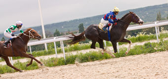 Horse racing at the hippodrome in Pyatigorsk. Royalty Free Stock Photography