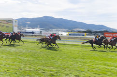 Horse Racing Hobart Tasmania Stock Images