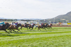 Horse Racing Hobart Tasmania Royalty Free Stock Image