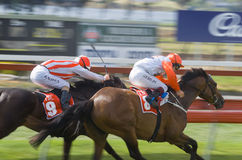 Horse Racing Hobart Tasmania Royalty Free Stock Images